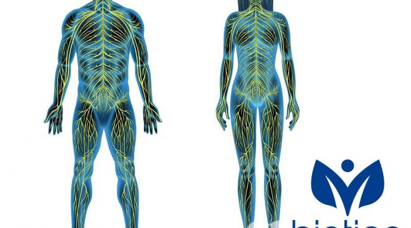нервна система Biotica
